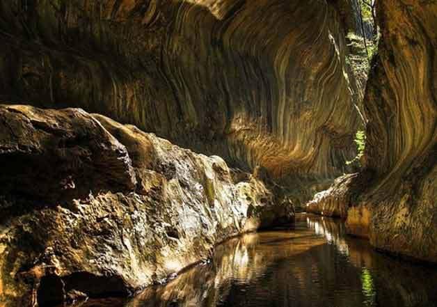 Insólitos animales encontrados en una cueva aislada por cinco millones de años