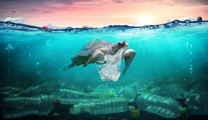 En 2050 habrá más plásticos en el mar que fauna marina