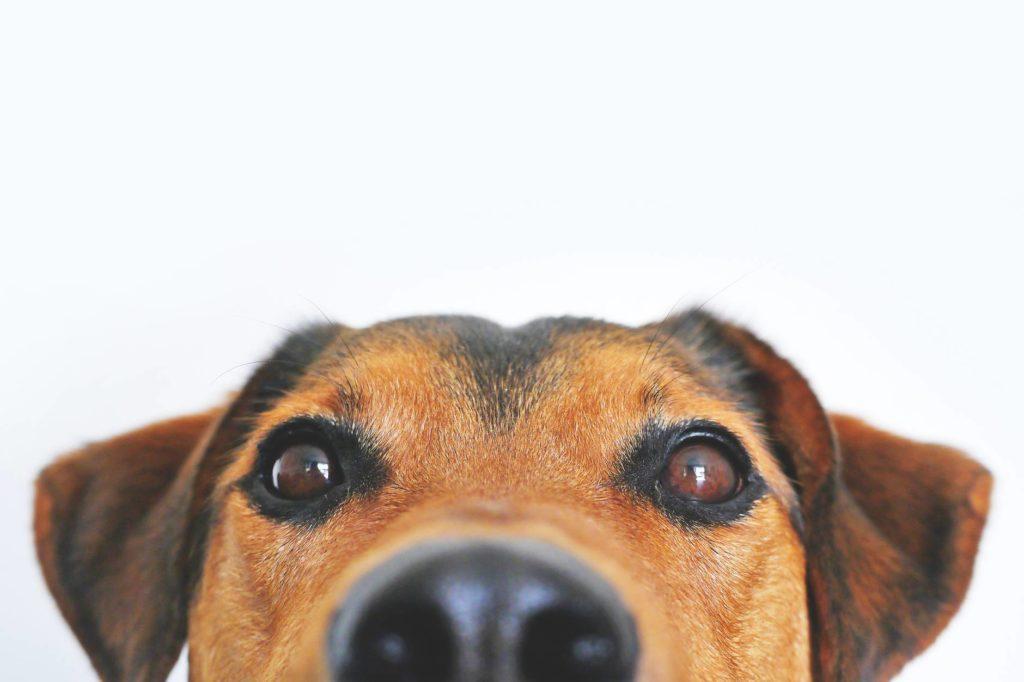 Los perros tienen una habilidad sobrenatural que nunca te hubieras imaginado… o si…