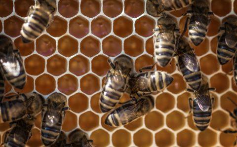 Polinizar flores con drones y pompas de jabón en lugar de abejas
