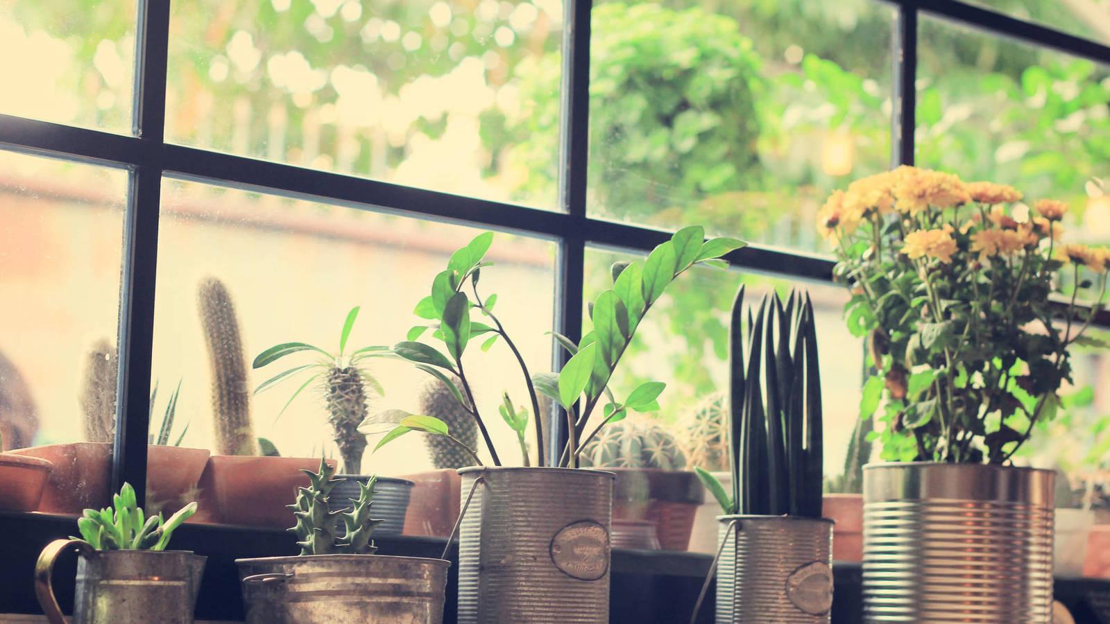 ¿Cuántas plantas se necesitan para purificar el aire de una casa?