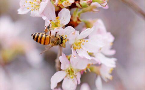 ¿Por qué tienen rayas las abejas y abejorros?
